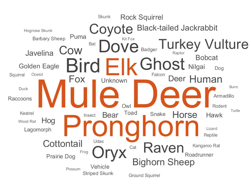 Figure 3. Word cloud showing relative distribution of species.