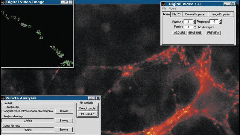 Image Acquisition Toolbox-Anwendung, die Bilder von zentralen Synapsen erfasst und analysiert, um die synaptische Übertragung im Zeitverlauf zu überwachen.