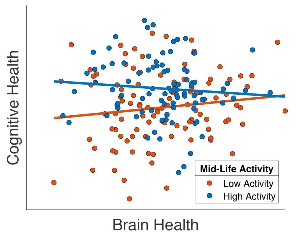 """Plot, der die Beziehung zwischen kognitiven Fähigkeiten und einem strukturellen MRT-Maß der Hirngesundheit (""""Gesamtvolumen an grauen Zellen"""") bei einer Untergruppe von Cam-CAN-Teilnehmern über 65 Jahren zeigt, adaptiert von Chan et al. (2018). Jeder Teilnehmer ist ein Punkt, wobei die Farbe des Punktes anzeigt, ob er im mittleren Alter an vielen (blau) oder wenigen (rot) Aktivitäten außerhalb des Arbeitsplatzes teilgenommen hat."""