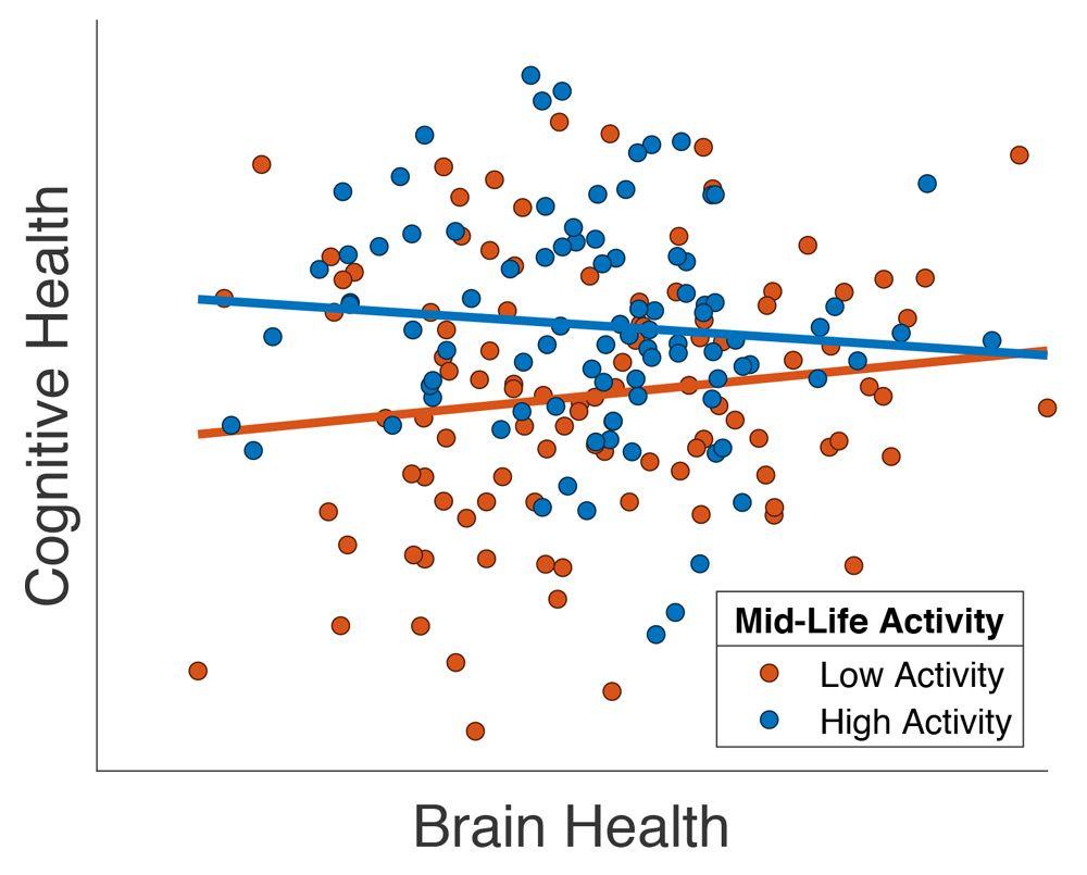 Graphique montrant les effets positifs des activités sociales sur la santé cérébrale de patients âgés